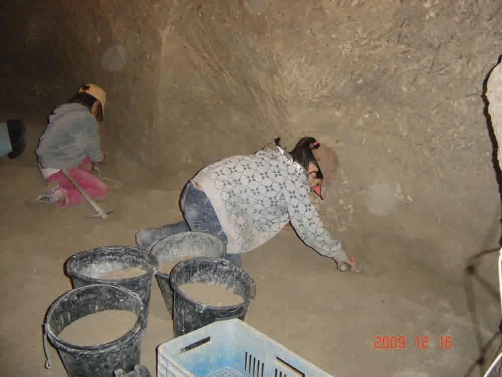 ארכאולוגים ליום אחד. בני נוער נלהבים חופרים במרשה, מפנים עפר ולעתים מגלים ממצאים. כל דלי עובר סינון קפדני כדי שאפילו שבר זעיר לא ילך לאיבוד. לאורך שלושים שנות החפירה במקום פונו ונבדקו אלפי מטרים מעוקבים של אדמה בשיטה זו צילום: איאן שטרן