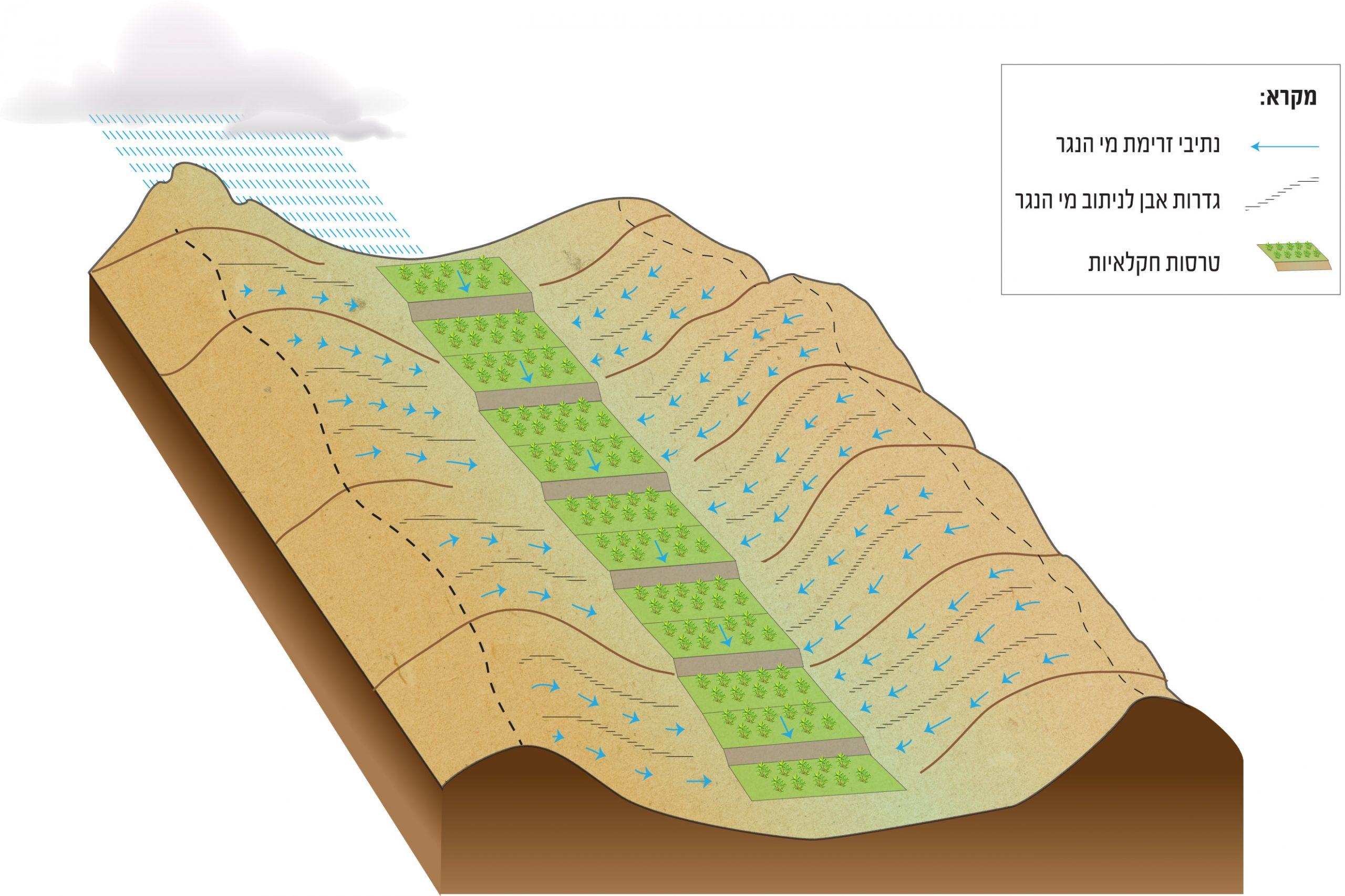 קצירת גשם. החקלאים הנבטים בנו מערכת של גדרות אבן שניתבה את מי הגשם אל הכרמים והשדות בעמק