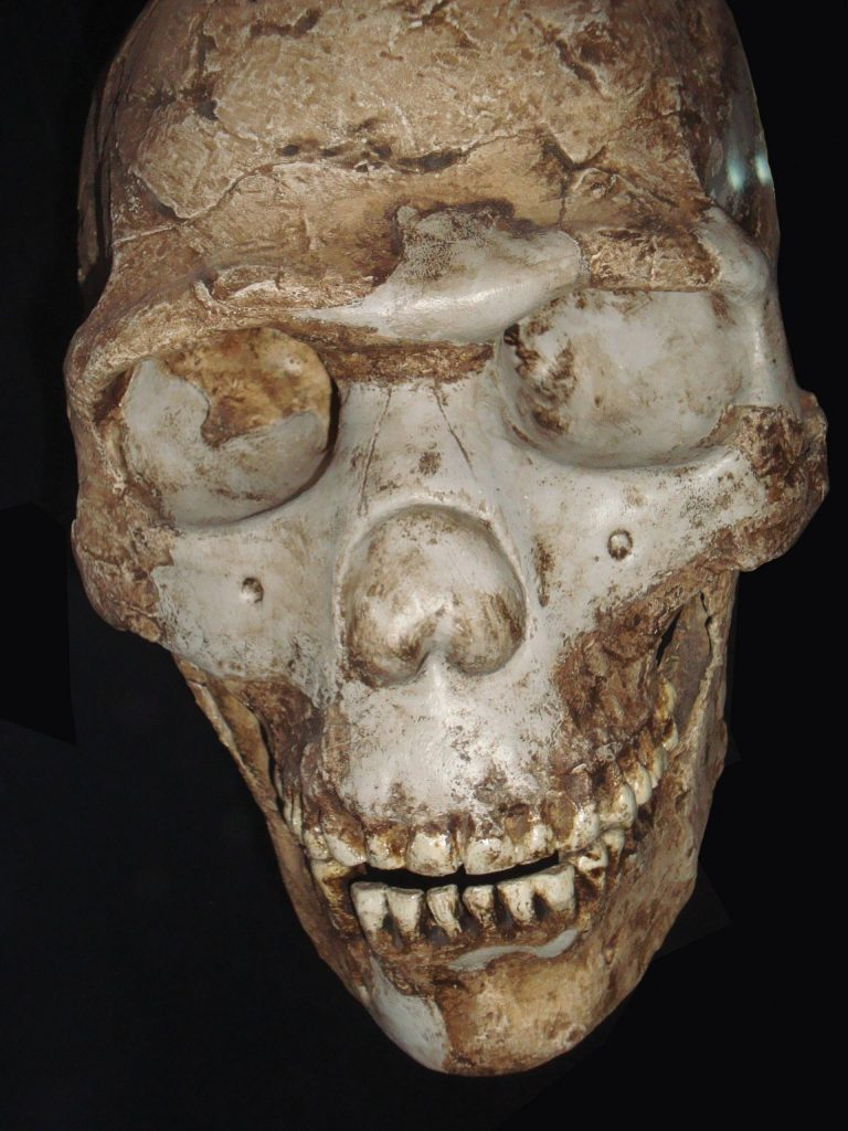 Skull of Homo sapiens sapiens reconstructed from fragments found in the Cave of the Goats, another name for the Es-Skhul Cave, in the Carmel mountain range