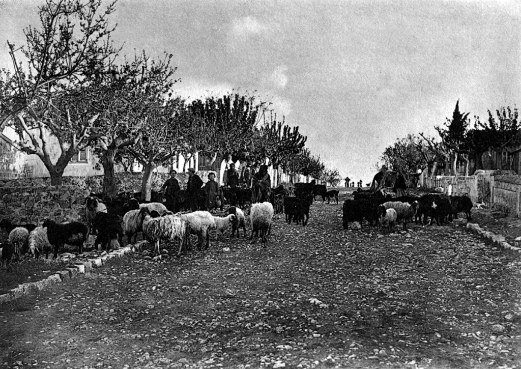 מחוזות ילדותו. צאן ברחובות זכרון יעקב, 1912