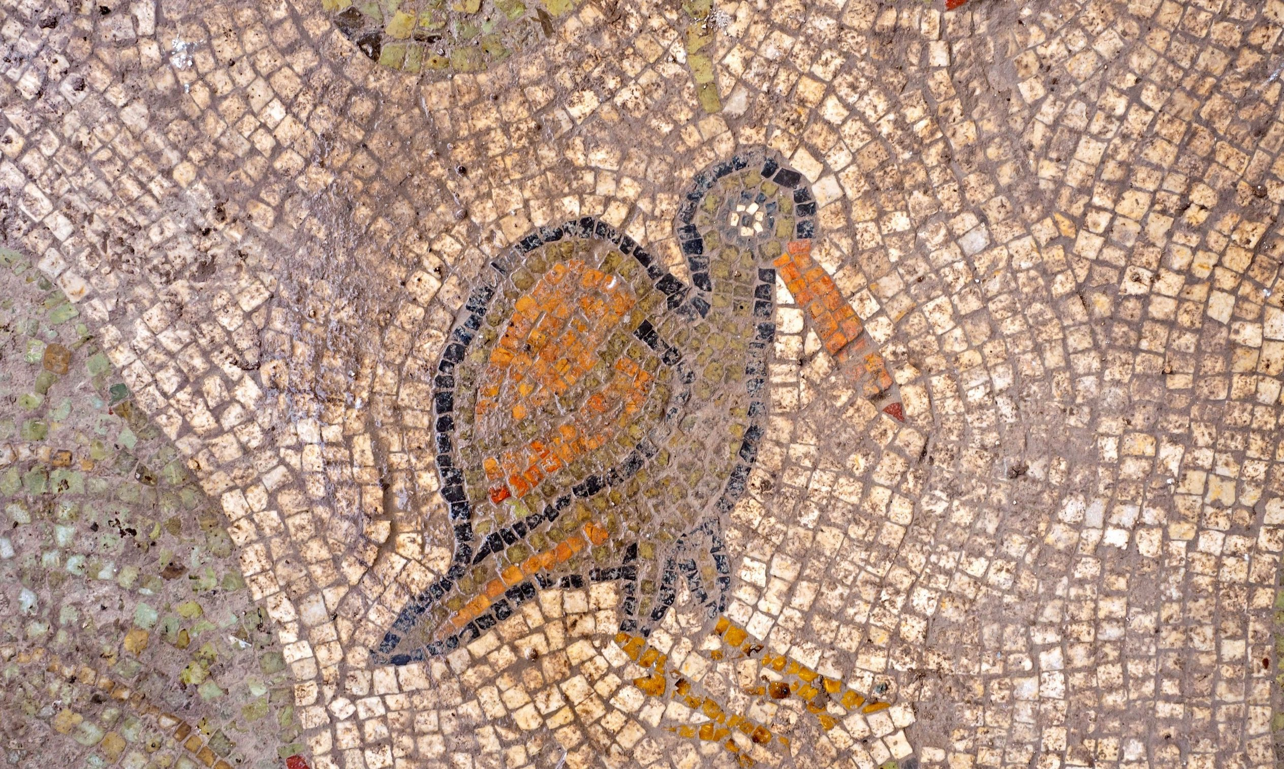 Detail from the church's mosaic floor, circa early sixth century