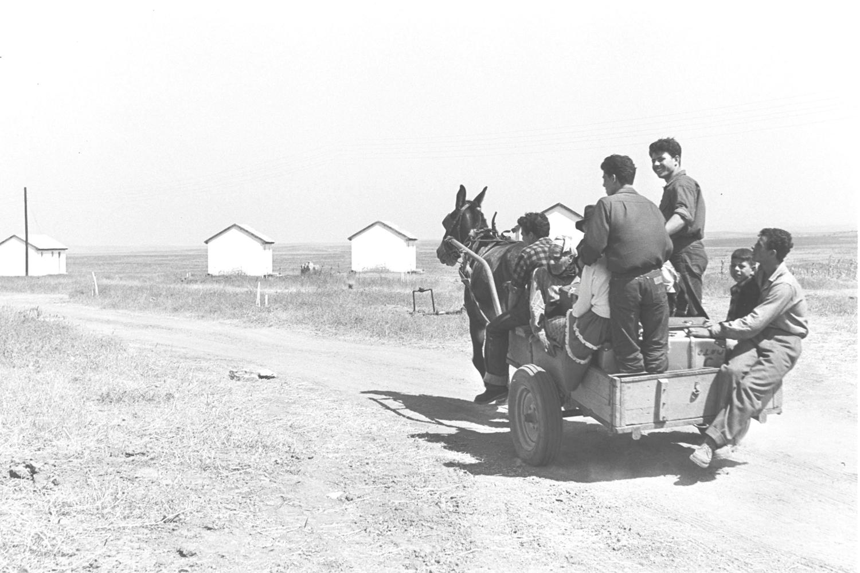 השמועה שיש במרוקו גם יהודים חקלאים עוררה התפעלות בקרב מנהיגי היישוב. עולים מגיעים למושב אחוזם, 1954