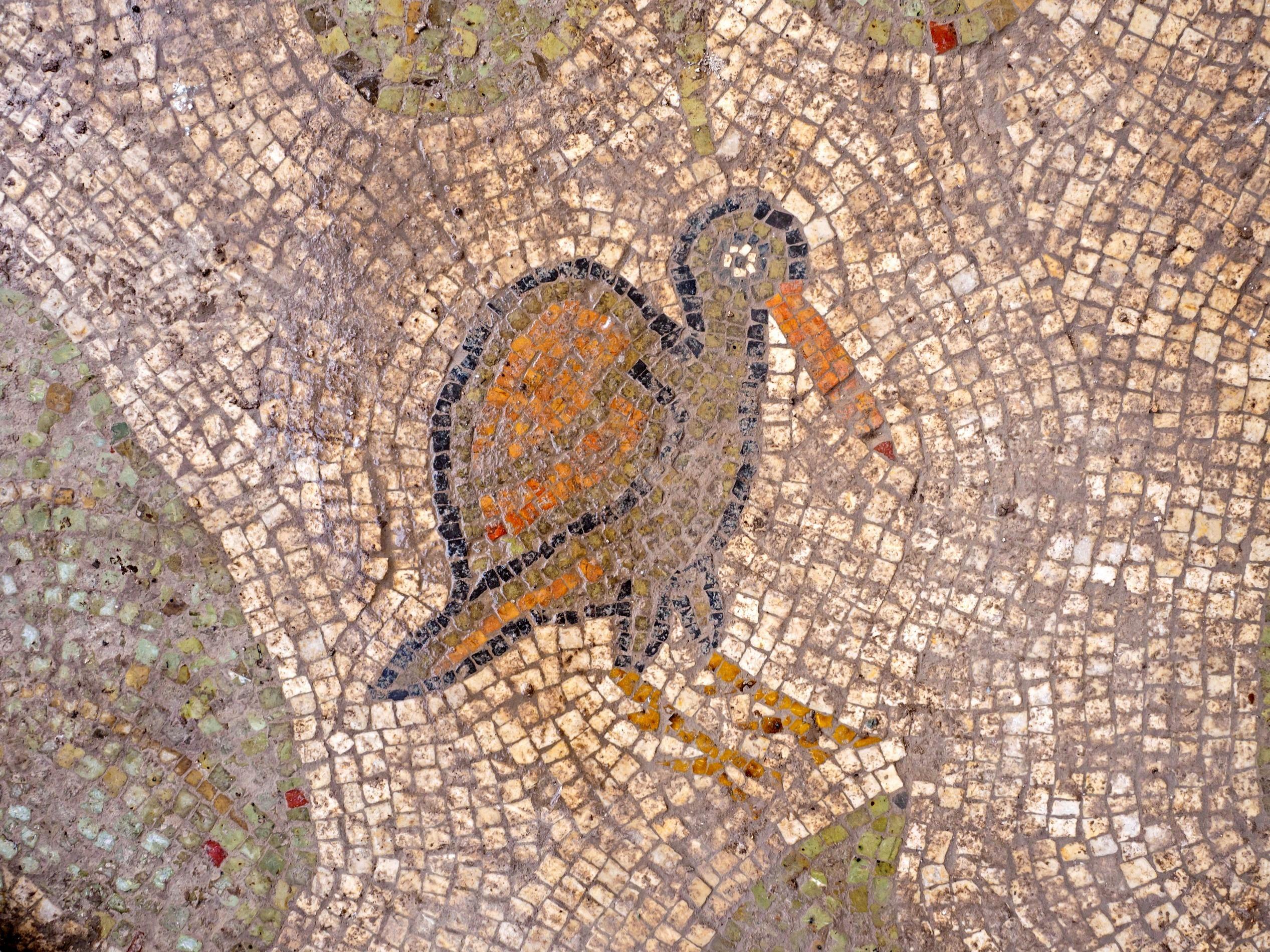 ציפור מתוך הפסיפס שנחשף בקרבת בית שמש. פרט.