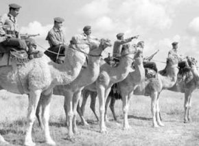 פרשי הגמלים גששים בדואים 24 נובמבר 1953