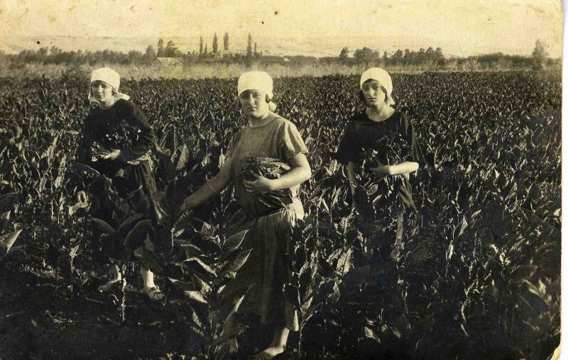 העלייה הופסקה בשל משבר כלכלי והתחדשה בעקבות הניסיון לגדל טבק בארץ, אך אופייה של העלייה לא השתנה באופן מהותי. חלוצות בשדות טבק בראשון לציון